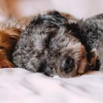 犬が寝ているイメージ